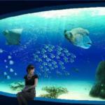 マリホ水族館が広島マリーナホップに2017年6月24日開業!
