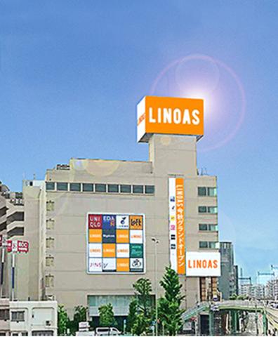 linoas2